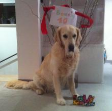 Bonnie's 10 Geburtstag